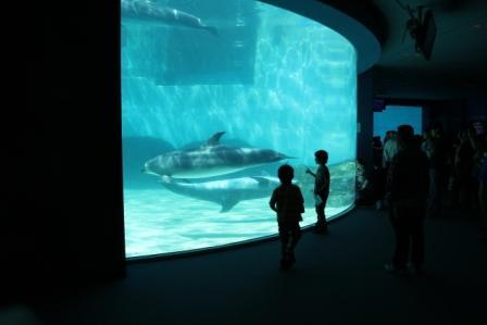 名古屋港水族館6.jpg